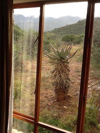 Mymering: Karoo veld from Room Towerkop