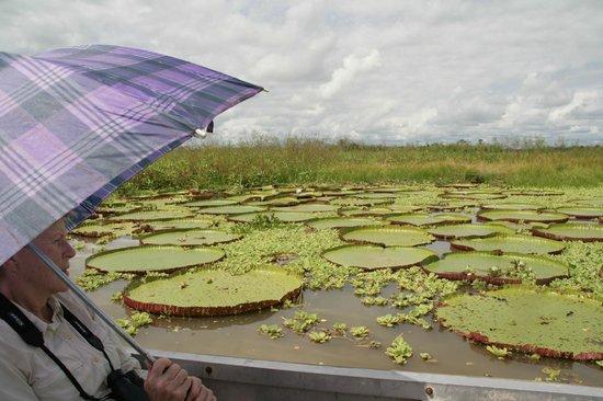 Muyuna Amazon Lodge: Lilly pads