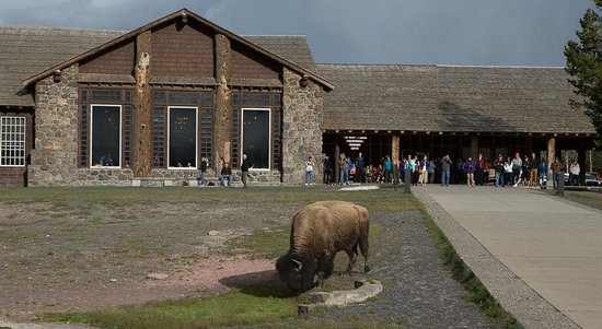 Old Faithful Lodge Cabins: Local wildlife are alway grazing through the area