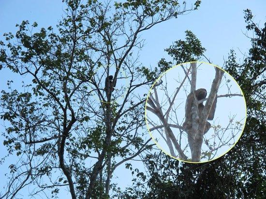 Muyuna Amazon Lodge : Sloth