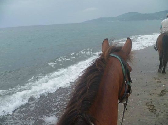 Agriturismo I Moresani: Beach riding