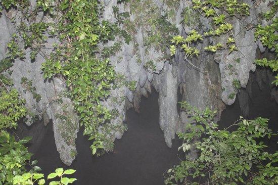 Parque de las Cavernas del Rio Camuy : First thing you see whe you enter