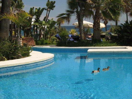 Kempinski Hotel Bahía: Ducks on the pool!