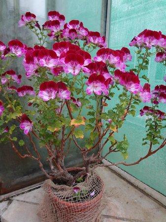 Botanischer Garten Muenchen-Nymphenburg: Цветы в оранжерее ботанического сада