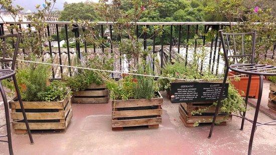 La Casaca: Rooftop herb garden and seating area