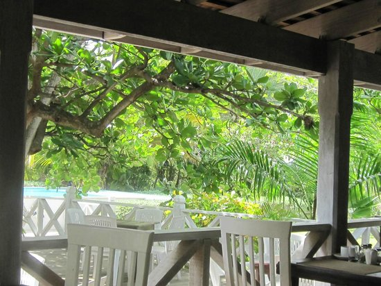 Coconut Beach Club : View from Dining area