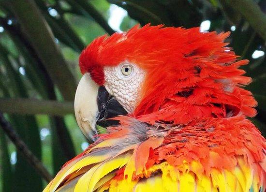 Casa Santo Domingo Museums: Parrots in the courtyard at Casa Santa Domingo