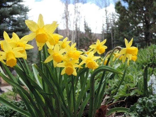 Betty Ford Alpine Gardens: Spring flowers in the gardens