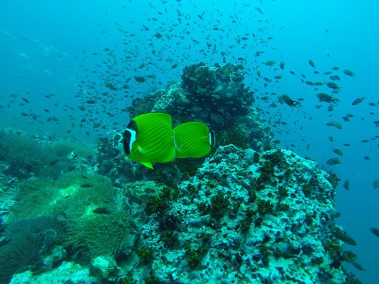 Member Diving