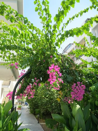 Peridis Family Resort: trees with flowers at the pool
