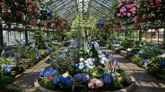 Niagara Parks Floral Showhouse: Hydrangea display