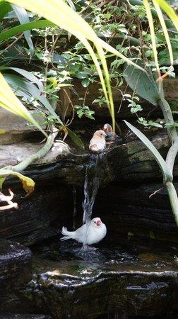 Niagara Parks Floral Showhouse: Birds taking a bath