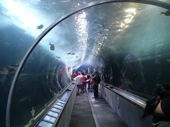 Aquarium of the Bay: amazing tunnel