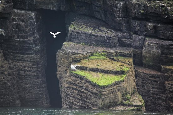 Seacoast Safaris: Magical Scene- Puffin Island Cliffs & Birds- Courtesy Paul Rees