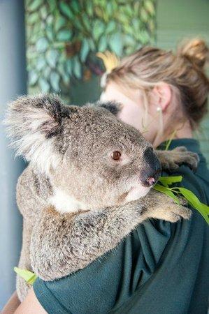 Cohunu Koala Park: Coala Hugs!