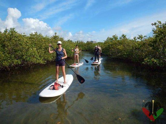South Florida Paddle: Paddling through the mangrove trail
