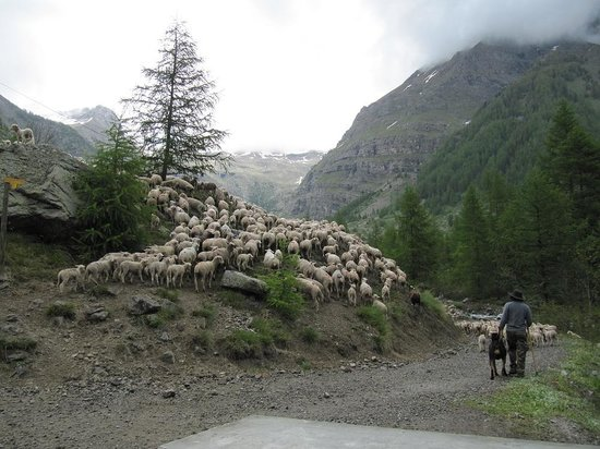 Buissard, France: moutons