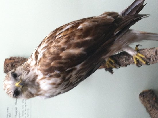 San Bernardino County Museum: Lots of birds