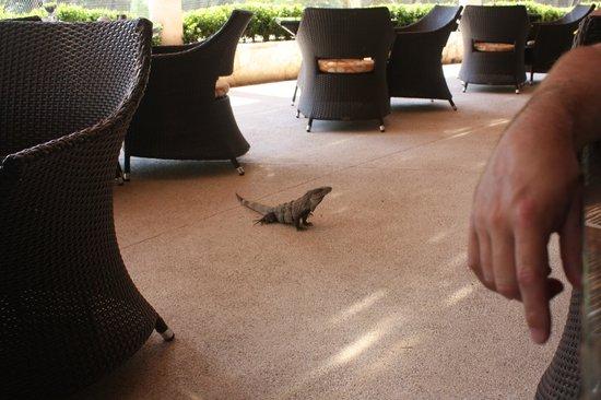 Secrets Maroma Beach Riviera Cancun: Breakfast with the iguana