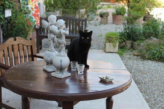 B&B Corte del Drago: Uno dei gatti