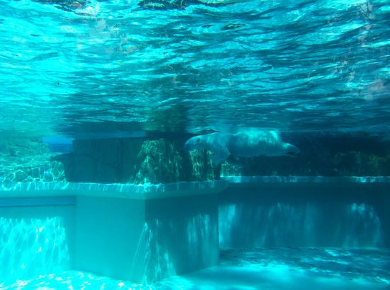 Lincoln Park: Visita zoo