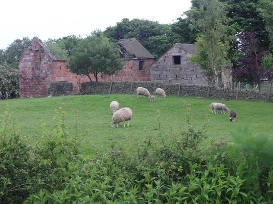 Rock House Farm Holiday Cottages: these buildings are not the cottages! neighbours