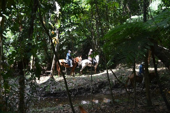 Robert's Grove Beach Resort: Horseback Tours