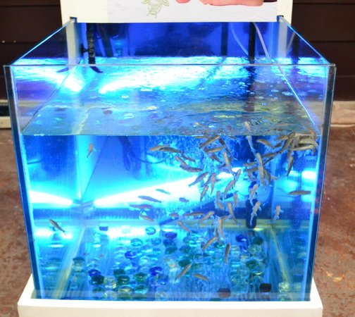 Blue fish spa picture of blue fish spa cancun tripadvisor for Fish spa near me