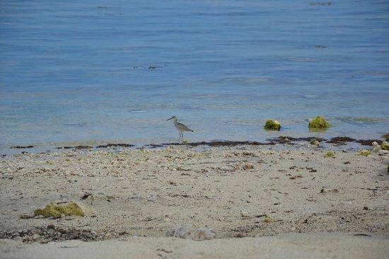 Islander Resort, a Guy Harvey Outpost: Strand