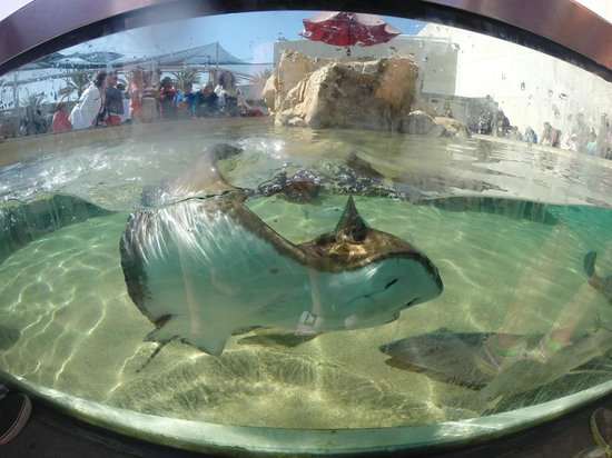 Ray Picture Of Aquarium Of The Pacific Long Beach