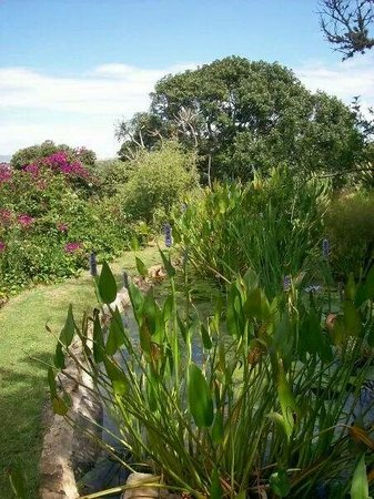 River Roost: A little glimpse of the big garden