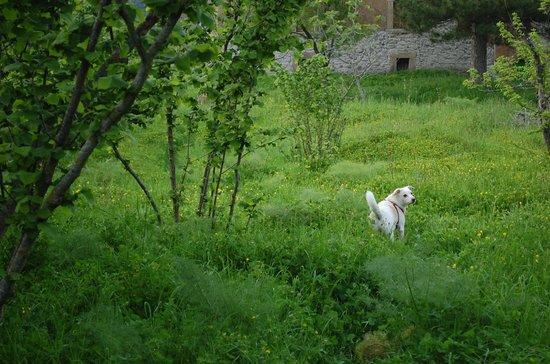 Agriturismo Pardo: prati e noccioleti attorno la dimora