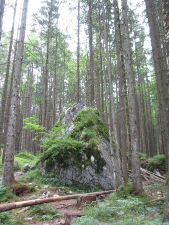 Zauberwald and Hintersee: The forest is very nice indeed, next to the trail surrounding Hintersee