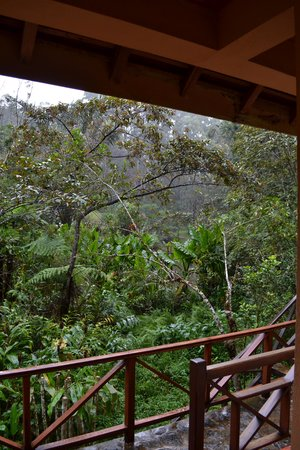Vakona Forest Lodge : View from our varanda