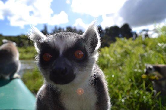 Vakona Forest Lodge : Ringtail Lemur island on the canoe