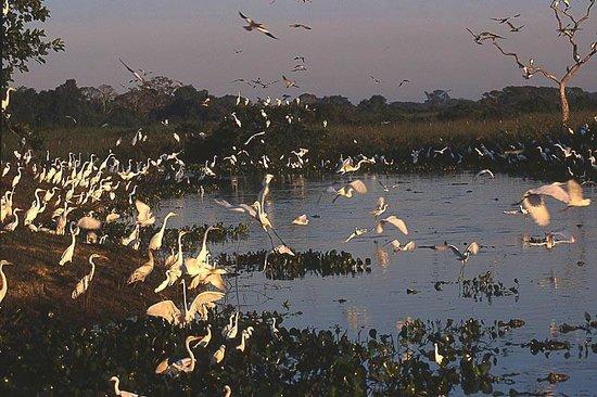 Araras Pantanal Ecolodge: la mattina presto dal loggiato della mia camera