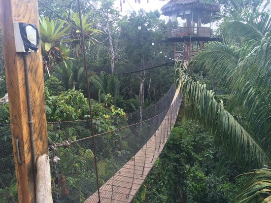 Treehouse Lodge: View of bungalow #6