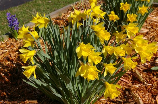 1875 Homestead Bed and Breakfast : Spring loveliness