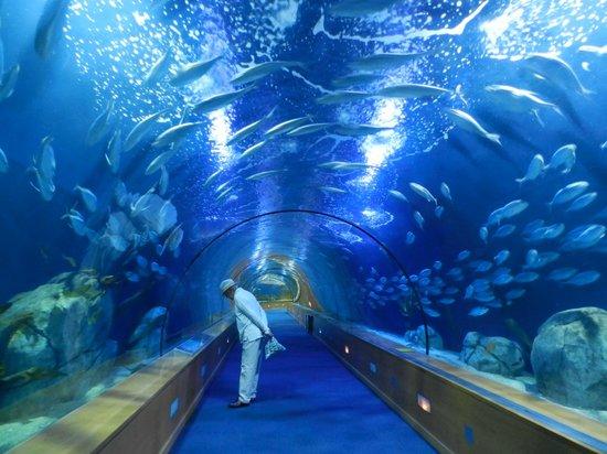 Oceanografic: Los túneles