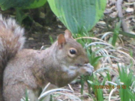 Greenwich Village : Squirrel in the park