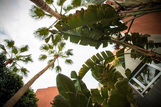 Roca Nivaria GH - Adrian Hoteles : garden