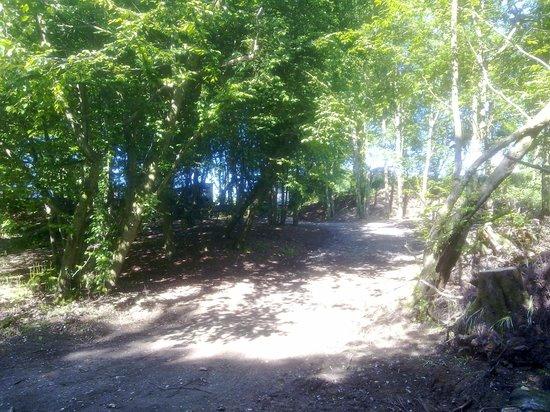 Thriftwood Holiday Park : Woodland Walk Area