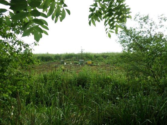 Ardres Bridge Cottage: Les ruches