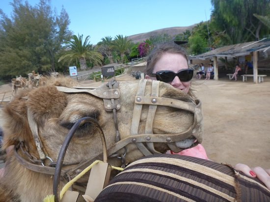 Oasis Park Fuerteventura: Pepo the camel wants a kiss