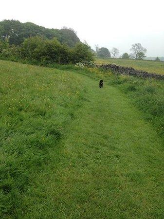 Beech Croft Farm: my dog enjoying a run