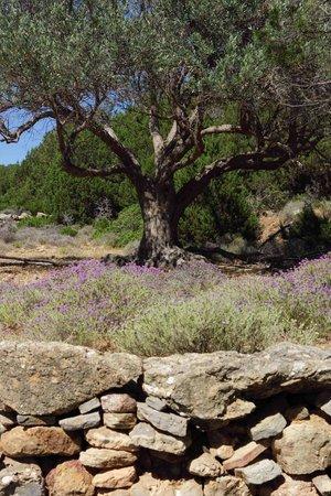 Camping Makis: Thym en fleur - randonnée du sud