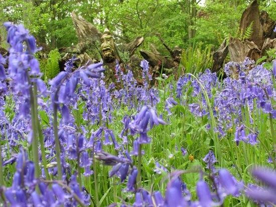 Burnby Hall Gardens and Museum: Woodland Stumpery area
