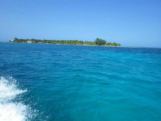 Coco Plum Island Resort : bluewater