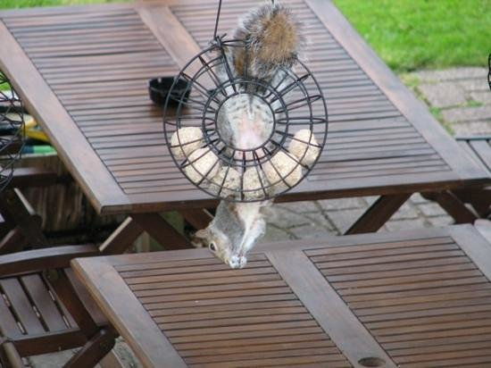 Glenwood Guest House: Even the squirrels love it at Glenwood