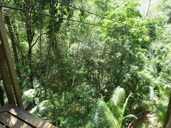 Coco Plum Island Resort: zip lines
